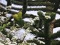 Lente - panoramio (1).jpg
