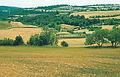 Les Plantes Cultivades. Cereals. Imatge 172.jpg
