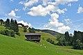 Lesachtal Tscheltsch 4 Joehrerhof weidende Schafe 16072014 630.jpg