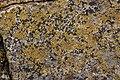 Lichen (26051473897).jpg