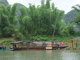 Сколько лет растет бамбук
