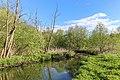 Likova river in Meshkovo 02.jpg