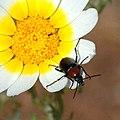 Linsecte et la fleur (3417650734).jpg