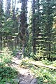 Little Yoho Valley IMG 4844.JPG
