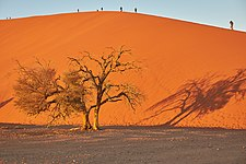 Lone tree in front of Dune 45 Sossusvlei Namibia.jpg