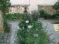 Lorto-botanico-di-padova-2016 27757185784 o 11.jpg
