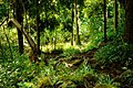 Lyon Arboretum - Aihualama Trail (8330359381).jpg