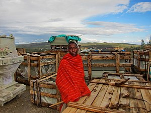 Olkaria - Maasai man at Olkaria - some communities have been displaced by the power generation projects
