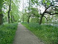 Magdalene Cambridge fellows garden riverside path.jpg