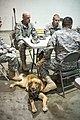 Man's best friend helps NC Guardsman with PTSD 140111-Z-GT365-085.jpg