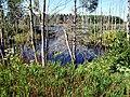 Marsh near Lake Verde, PEI (9702298490).jpg