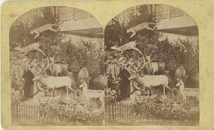 Martha Maxwell - Stereograph of Rocky Mountain display, Philadelphia Centennial Exhibition, Centennial Photographic Company