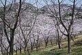 Mato Park - panoramio.jpg