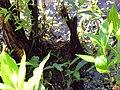 Mattaponi Wildlife Management Area, Virginia (7468015750).jpg