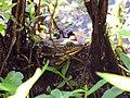 Mattaponi Wildlife Management Area, Virginia (7468020198).jpg