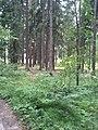 Mežs aiz Ogres meža tehnikuma - panoramio (2).jpg