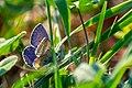 Metulj Butterfly (44234667381).jpg