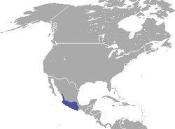 Mexican Cottontail area.png