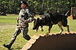 Military Working Dogs DVIDS257997.jpg