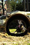 Military Working Dogs DVIDS257998.jpg