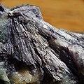 Mineral-1.jpg