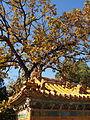 Ming Tombs (3019120505).jpg