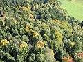 Mischwald im Herbst.jpg