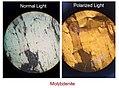 Molybdenite Under normal and polarized light.jpg