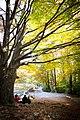 Montseny en otoño.jpg