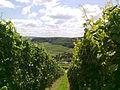 Mosel valley.jpg