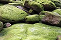 Moss Boulders (6226039012).jpg