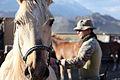Mountain Warfare Training Center teaches advanced horsemanship 130905-M-AM802-2332.jpg