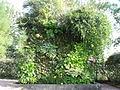 Mur végétal chaumont 2.JPG
