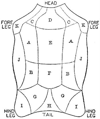 NIE 1905 Wool - diagram of Leicester lamb fleece.jpg