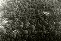 NIMH - 2155 042919 - Aerial photograph of Vaals, The Netherlands.jpg