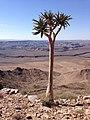 Namibia Fish River Canyon-Quiver Tree.jpg