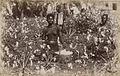 Natal cotton field.jpg
