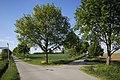 Naturdenkmal Obstbaum- und Lindenallee am Dreispitz, Kennung 81150530016, Jettingen-Sindlingen 14.jpg