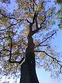 Nature Khémisset 19.jpg