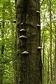 Nature reserve Žižkův vrch in summer 2012 (16).JPG