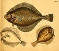 Naturgeschichte in Bildern mit erläuterndem Text (Taf. XLIX) (6059212182).jpg