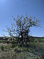 Naturspektakel im Biosphärenreservat Schorfheide-Chorin.jpg
