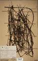Neuchatel Herbarium Types NEU000113023.tif