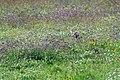 Ngorongoro 2012 05 30 2502 (7500994642).jpg