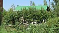 Nice snag on the flowerbed. August 2014. - Коряга на клумбе. Август 2014. - panoramio.jpg