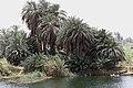 Nile Esna Edfu 10.jpg