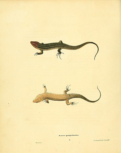 File:North American herpetology, or, A description of the reptiles inhabiting the United States (6076443652).jpg