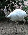 Nyíregyháza Zoo, nandu.jpg