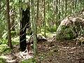 Nybrännberget 2010d.jpg