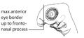 O5. Maxillary process anterior to eye (G01e).png